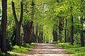 Baumbestand Schnellenberger Allee (Gemarkung Lüneburg) 01.jpg