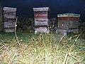 Beehives near Ellarcarr Pike - geograph.org.uk - 564480.jpg