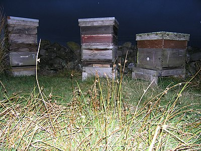 Beehives near Ellarcarr Pike - geograph.org.uk - 564480.jpg