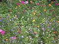 Beet mit Sommerblumen.JPG