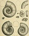 Beiträge zur Paläontologie und Geologie Österreich-Ungarns und des Orients - Mitteilungen des Geologischen und Paläontologischen Institutes der Universität Wien (1894) (19742601873).jpg