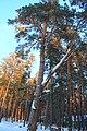 Berdsk, Novosibirsk Oblast, Russia - panoramio (17).jpg