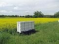 Bienenstoecke-2012-ffm-552.jpg