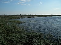 Big Creek National Wildlife Area.jpg