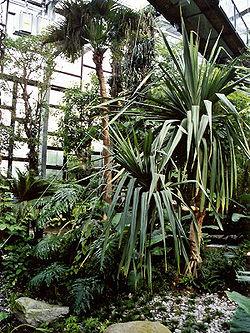 Biosphäre Potsdam Wikipedia