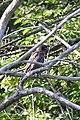 Bird - London, Ontario 01.jpg