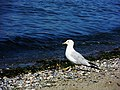 Bird 053 - 6098837033.jpg