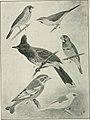 Bird notes (1922) (14752434121).jpg