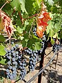 Black Stallion Winery, Napa Valley, California, USA (6242288802).jpg