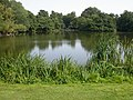 Boathouse Pond - geograph.org.uk - 47200.jpg