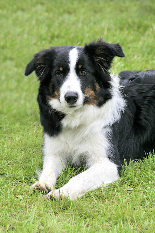 Dog Breed Calendar Publishers