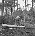 Bosbewerking, arbeiders, boomstammen, werkzaamheden, Bestanddeelnr 251-7854.jpg