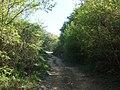 Bosco presso la Cannella - panoramio (1).jpg