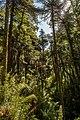 Bosques milenarios.jpg