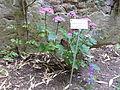 BotanicGardensPisa (29).JPG