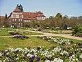 Botanischer Garten - Fruehlingsblumen (Spring Flowers) - geo.hlipp.de - 35112.jpg