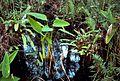 Botany garden park.jpg