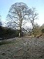 Bottomland trees - geograph.org.uk - 1738131.jpg