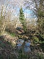 Bournemouth , Trees and Pond - geograph.org.uk - 1704180.jpg