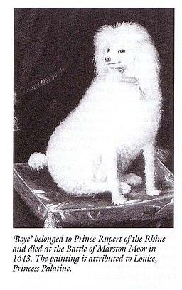 Boye, Prince Rupert's Poodle