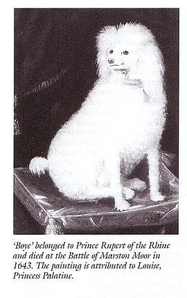 Boy (dog) - Wikipedia