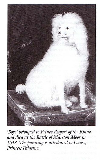 Boy (dog) - In Royalist parodies, Boy was said to be a 'Lapland Lady' who had been transformed into a white dog.