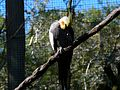 Brevard Zoo Australian Animals - Flickr - Rusty Clark (33).jpg