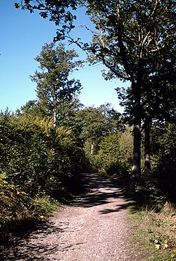 Bridleway, Great Hawkwell Wood - geograph.org.uk - 255379