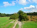 Bridleway through West Sussex Golf Course - geograph.org.uk - 246049.jpg