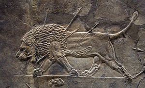 Asiatic lion - The Lion Hunt of Ashurbanipal, a sequence of Assyrian palace reliefs, Nineveh, 7th century BC. Note that the lion's mane extends through much of the belly.