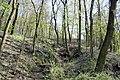 Brno Wilsonův les 1.jpg