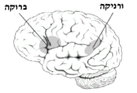 Broca-Wernicke Area Small - he.png