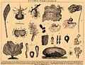 Brockhaus and Efron Encyclopedic Dictionary b13 320-0.jpg