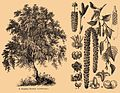 Brockhaus and Efron Encyclopedic Dictionary b35 186-1 cropped3.jpg