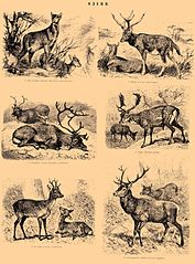 Ilustracja z Brockhaus and Efron Encyclopedic Dictionary (1890—1907)