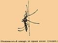 Brockhaus and Efron Encyclopedic Dictionary b85 135-2.jpg