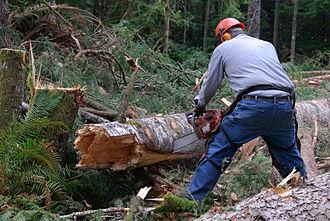 Log bucking - Bucker - Making the Cut