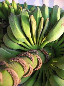 Bunch of bananas -- Goa, India.JPG