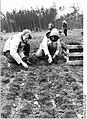 Bundesarchiv Bild 183-1982-0406-009, Güstrow, Frühjahrsaufforstung, Helfer.jpg