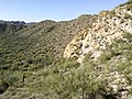 Butcher Jones Trail - Mt. Pinter Loop Trail, Saguaro Lake - panoramio (147).jpg