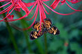 Butterfly & Spider Lily.jpg