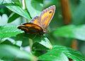 Butterfly (2683328010).jpg