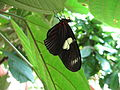 Butterfly 3 houston.jpg
