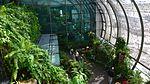 Butterfly Garden Changi Airport Singapore by Dr Raju Kasambe DSC 5250 (3).jpg