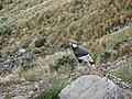 Cóndor Andino.jpg