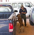 CBP Canine Training Facility El Paso Texas (28305798382).jpg