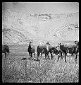 CH-NB - Persien, Elburs-Gebirge (Elburz)- Pferde - Annemarie Schwarzenbach - SLA-Schwarzenbach-A-5-06-186.jpg