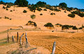 CSIRO ScienceImage 4188 Cleared sand dune country on the Cooke Plains SA 1992.jpg