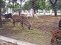 Cabras y Ciervos - panoramio.jpg
