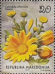 Calendula officinalis. Stamp of Macedonia.jpg